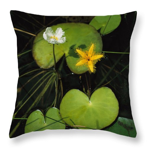 Atlantic Islands Throw Pillow featuring the photograph Heart-shaped Water Lily by Steve Winter