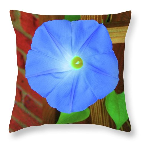 Morning Glory Throw Pillow featuring the photograph Heavenly Blue Morning Glory by Susan Carella