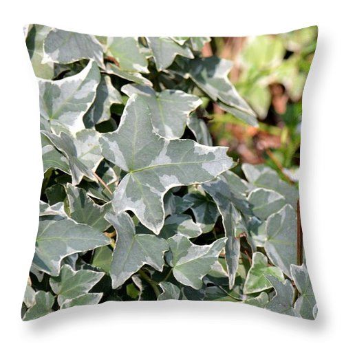 Helix Throw Pillow featuring the photograph Helix Glacier Ivy by Maria Urso