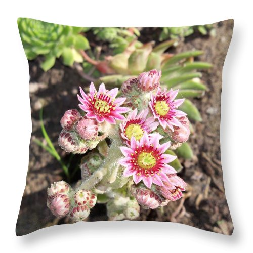 Flower Throw Pillow featuring the photograph Hens And Chicks Flowers by Corinne Elizabeth Cowherd