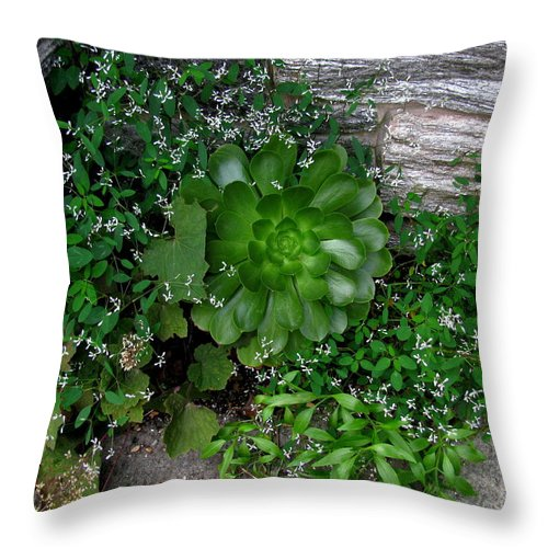 Hens And Chicks Throw Pillow featuring the photograph Hens And Lace by Deborah Crew-Johnson