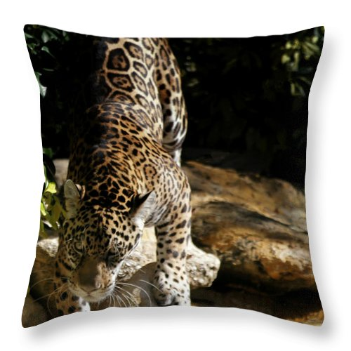 Jaguar Throw Pillow featuring the photograph Here Kitty Kitty by Sabrina L Ryan