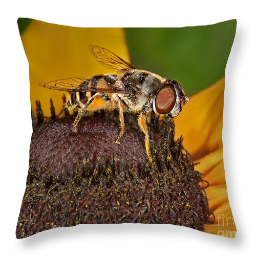Black Eyed Susan Throw Pillow featuring the photograph Here's Looking At You by Susan Candelario