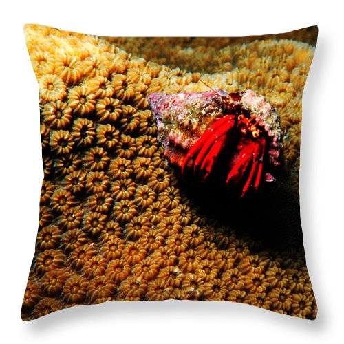 Hermit Crab Throw Pillow featuring the photograph Hermit Crab On Coral by Mike Nellums