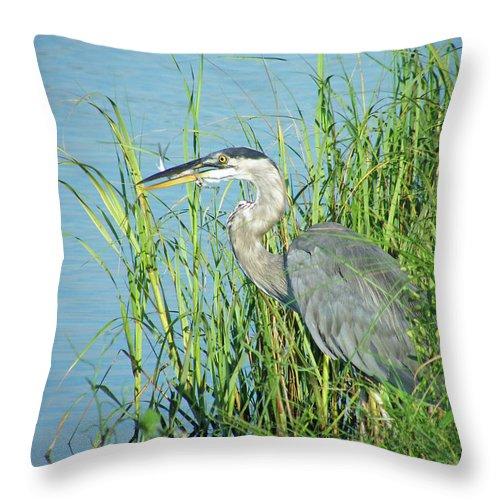 Heron Throw Pillow featuring the digital art Heron Rockefeller Wma La by Lizi Beard-Ward