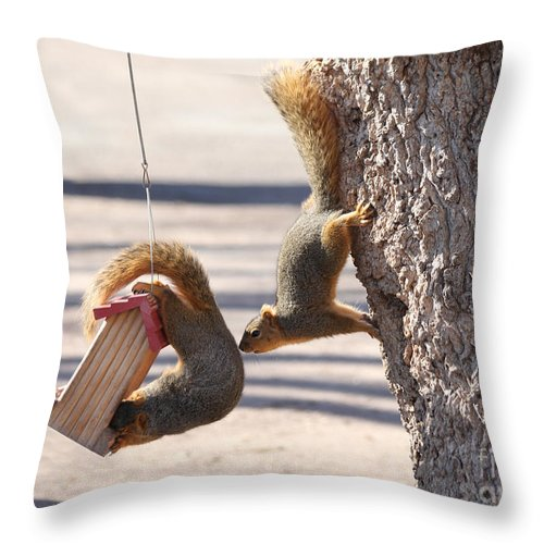 Squirrel Throw Pillow featuring the photograph Hey Any More Room by Lori Tordsen
