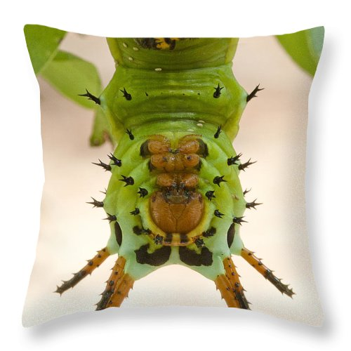 Hickory Horned Devil Caterpillar Throw Pillow For Sale By Bill Swindaman