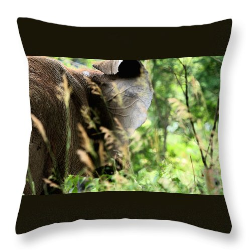 African Elephant Throw Pillow featuring the photograph Hidden Patterns Blending In by Angela Rath