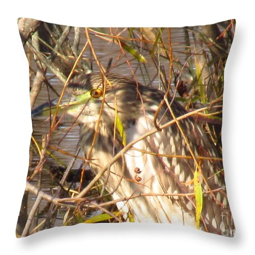 Bittern Throw Pillow featuring the photograph Hide And Seek by Rrrose Pix