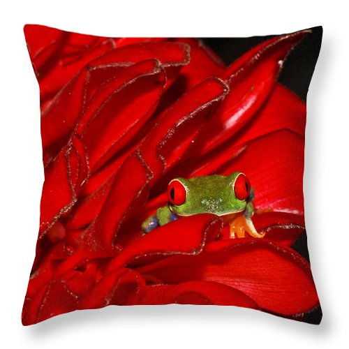 Frog Throw Pillow featuring the photograph Hiding by Tom and Pat Cory