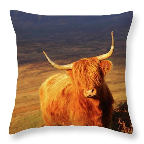 Cattle Throw Pillow featuring the photograph Highland Cattle by Bruce J Robinson