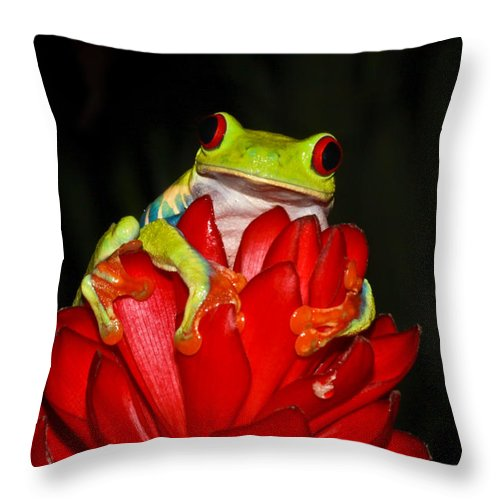 Frog Throw Pillow featuring the photograph Holding On by Tom and Pat Cory