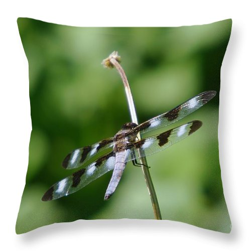 Dragonfly Throw Pillow featuring the photograph Holding To The Stem by Jeff Swan