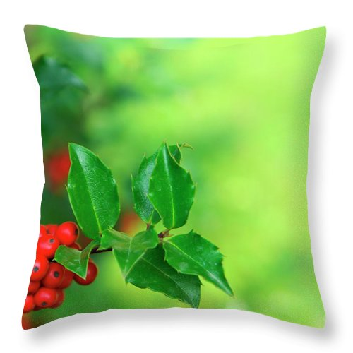 Autumn Throw Pillow featuring the photograph Holly Branch by Carlos Caetano