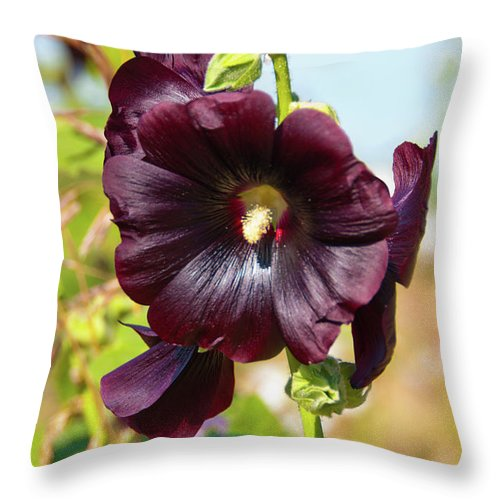 Flowers Throw Pillow featuring the photograph Hollyhock 7193 by Guy Whiteley