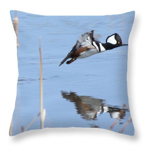 Hodded Throw Pillow featuring the photograph Hooded Merganser Flying by Lori Tordsen