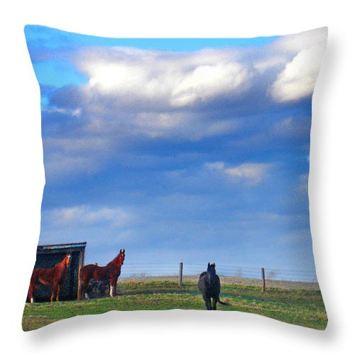 Landscape Throw Pillow featuring the photograph Horse Ranch Landscape by Steve Karol