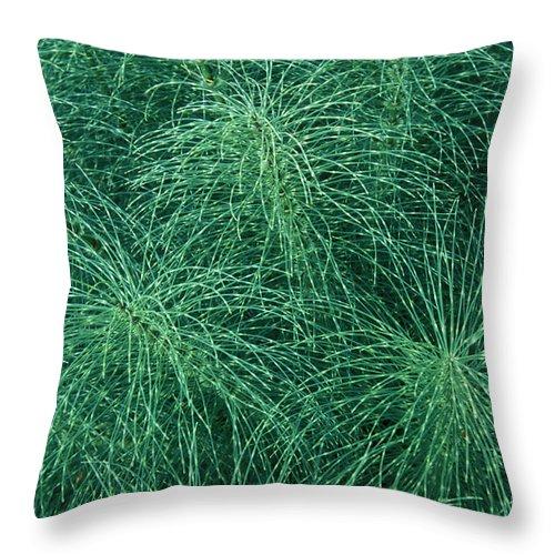 Bronstein Throw Pillow featuring the photograph Horsetail Fern by Sandra Bronstein