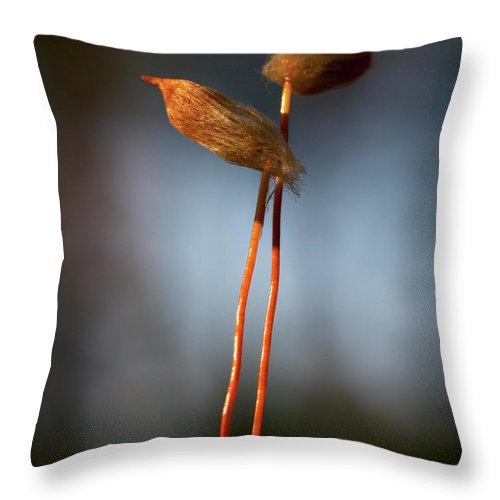 Jouko Lehto Throw Pillow featuring the photograph Hug by Jouko Lehto