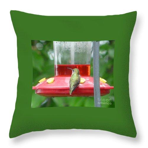 Hummingbird Throw Pillow featuring the photograph Hummingbird by Judi Deziel