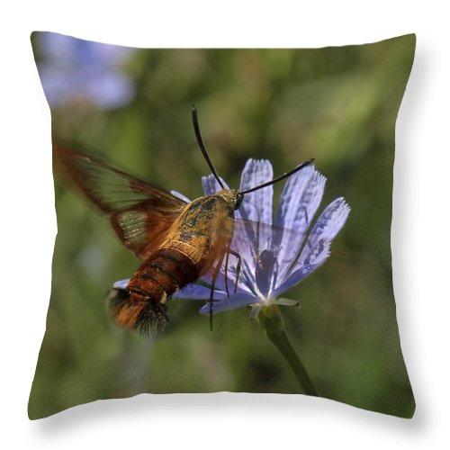 Nature Throw Pillow featuring the photograph Hummingbird Or Clearwing Moth Din137 by Gerry Gantt