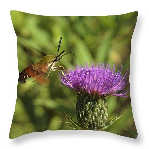 Nature Throw Pillow featuring the photograph Hummingbird Or Clearwing Moth Din141 by Gerry Gantt