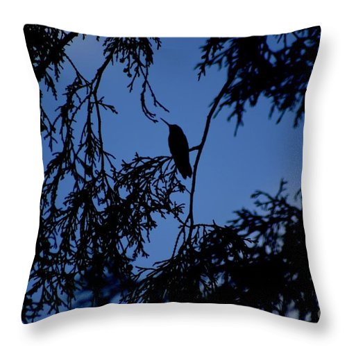 Hummingbird Throw Pillow featuring the photograph Hummingbird Silhouette by Living Color Photography Lorraine Lynch