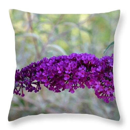 Hummingbirds Throw Pillow featuring the photograph Hummingbird's Delight by Maria Urso
