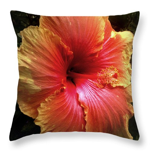 Hibiscus Throw Pillow featuring the photograph Hybiscus Multi Colored by Nancy Griswold