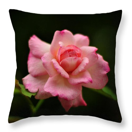 Floral Throw Pillow featuring the photograph Hybrid Tea Rose by Rebecca Sherman