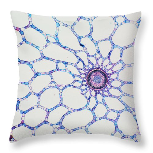 Stem Throw Pillow featuring the photograph Hydrophyte Stem And Aerenchyma by M. I. Walker