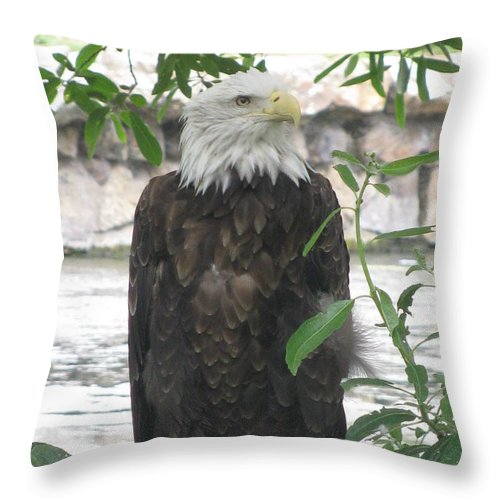 Eagle Throw Pillow featuring the photograph I Am Deep In Thought by Tina Marie