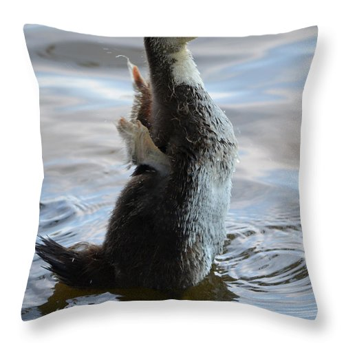 Duck Throw Pillow featuring the photograph I Believe I Can Fly by Maggy Marsh