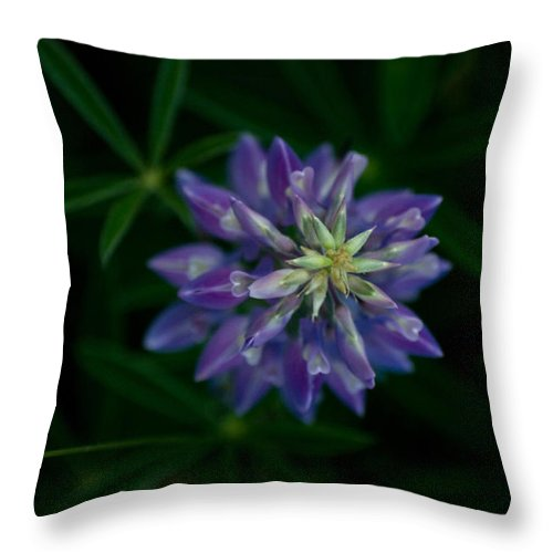 Plant Throw Pillow featuring the photograph I Heart U by Travis Crockart