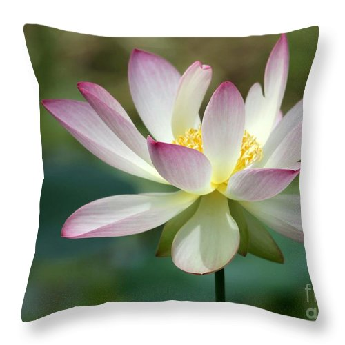 Lotus Throw Pillow featuring the photograph I Love Lotus by Sabrina L Ryan