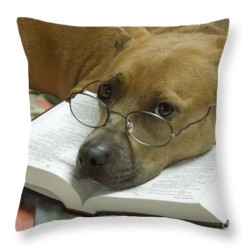 Pit Throw Pillow featuring the photograph I Read My Bible Every Day by Renee Trenholm