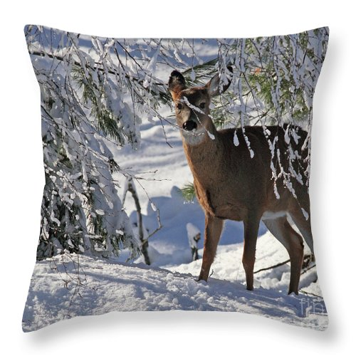 Deer Throw Pillow featuring the photograph I See You by Lloyd Alexander