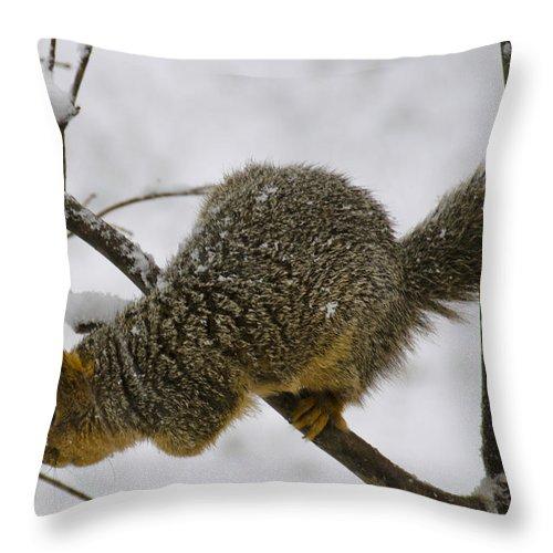 Usa Throw Pillow featuring the photograph I Wonder How Deep The Snow Is by LeeAnn McLaneGoetz McLaneGoetzStudioLLCcom
