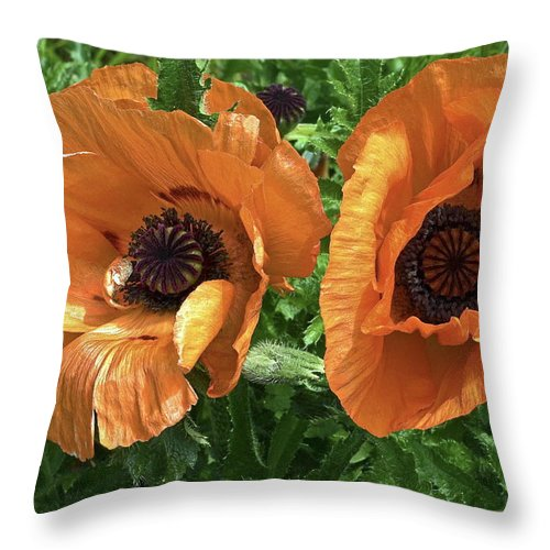 Iceland Poppies Throw Pillow featuring the photograph Iceland Poppies by Sally Weigand