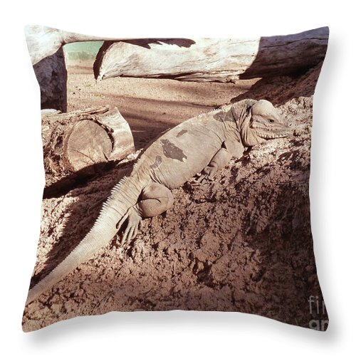 Iguana In The Sun Throw Pillow featuring the photograph Iguana In The Sun by Methune Hively