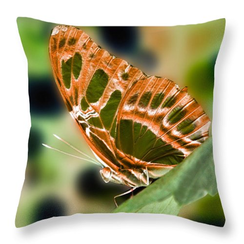 Butterfly Throw Pillow featuring the photograph Illuminated Butterfly by Smilin Eyes Treasures