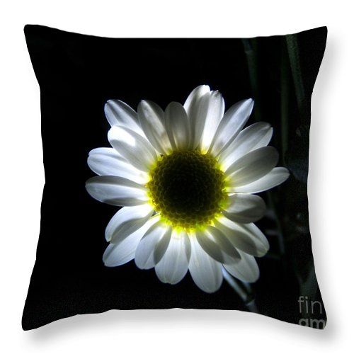 Artoffoxvox Throw Pillow featuring the photograph Illuminated Daisy Photograph by Kristen Fox