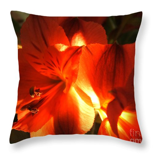 Artoffoxvox Throw Pillow featuring the photograph Illuminated Red Orange Alstromeria Photograph by Kristen Fox
