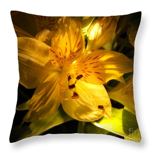 Artoffoxvox Throw Pillow featuring the photograph Illuminated Yellow Alstromeria Photograph by Kristen Fox