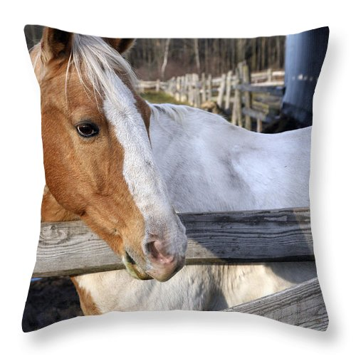 Horse Throw Pillow featuring the photograph Im Ready by Burney Lieberman
