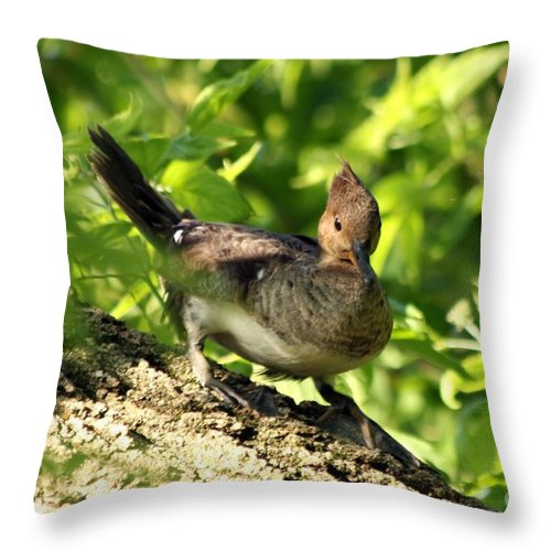 Immature Throw Pillow featuring the photograph Immature Hooded Merganser by Lori Tordsen