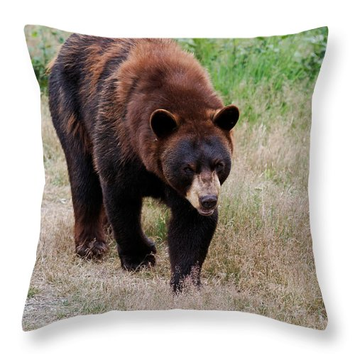 Bear Throw Pillow featuring the photograph In A Mood by Lloyd Alexander