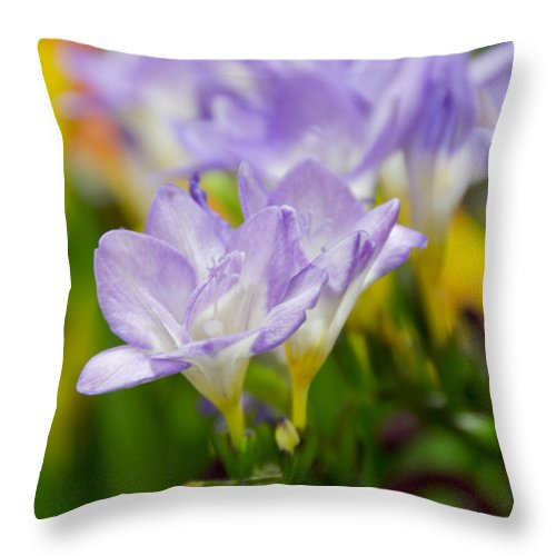 Floral Throw Pillow featuring the photograph In Living Color by Angelina Vick