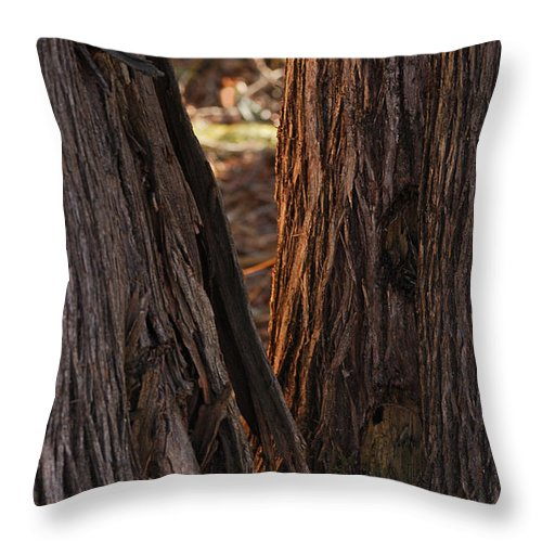 Trees Throw Pillow featuring the photograph In The Cedars by Susan Capuano
