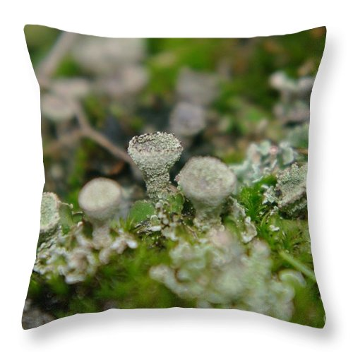 Mushrooms Throw Pillow featuring the photograph In The Land Of Little Mushrooms by Jeff Swan